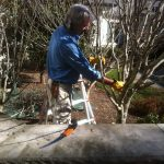 Kevin pruning small branches on an ornamental tree